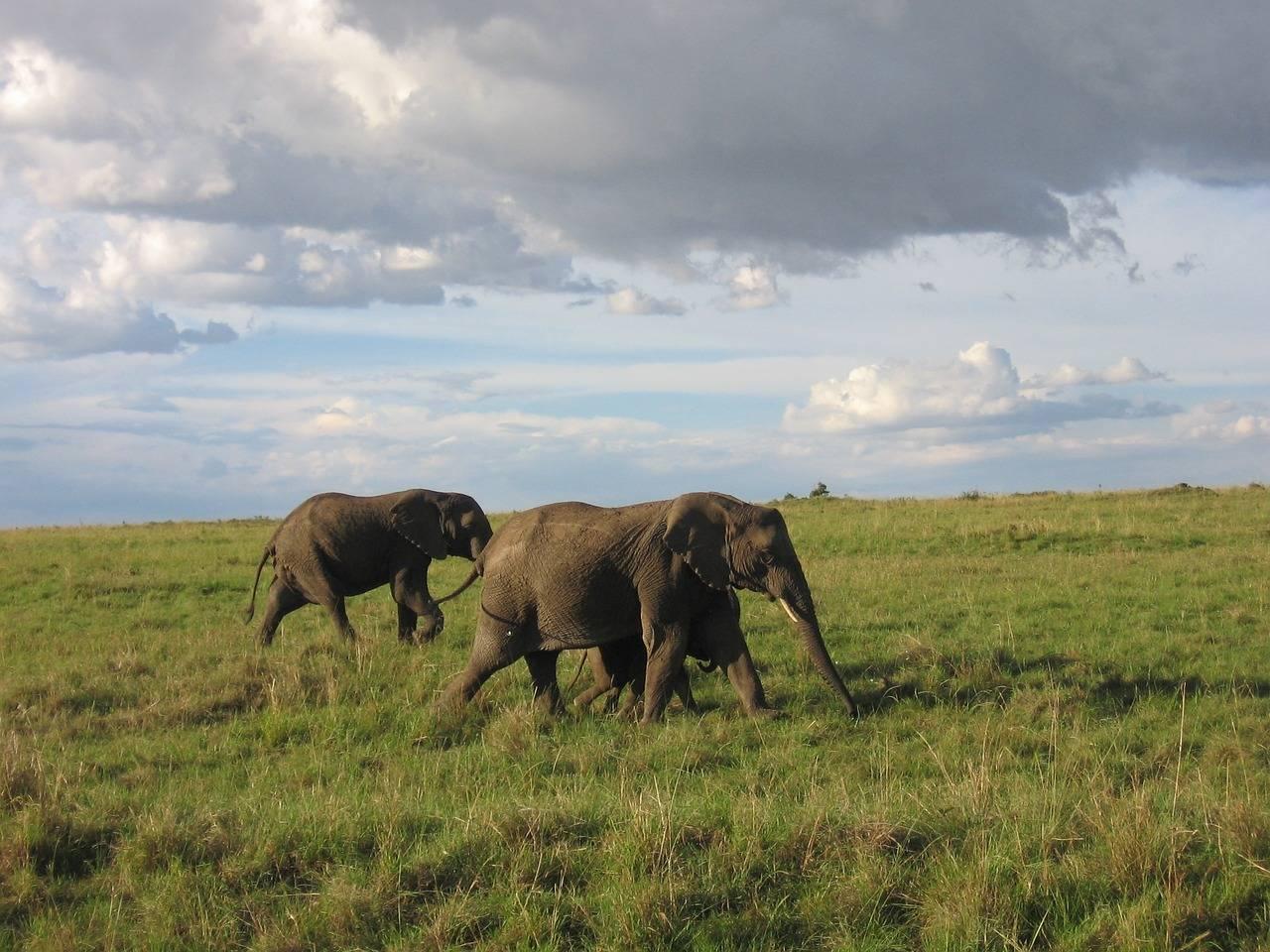 Kenya Visa Application Online Kenya eVisa - Ap...